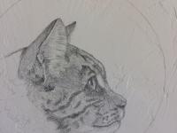 Marque-Todd-Study-Cat