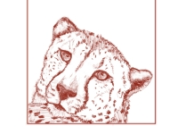 Marque Todd Cheetah Study
